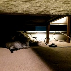 Benji's new favourite chillout space is under the sofa.